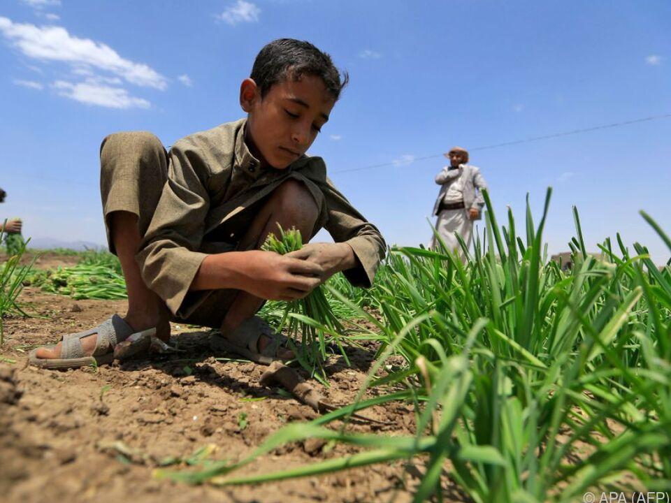 Feldarbeit im Jemen: Hungergefahr in Konfliktregionen besonders groß