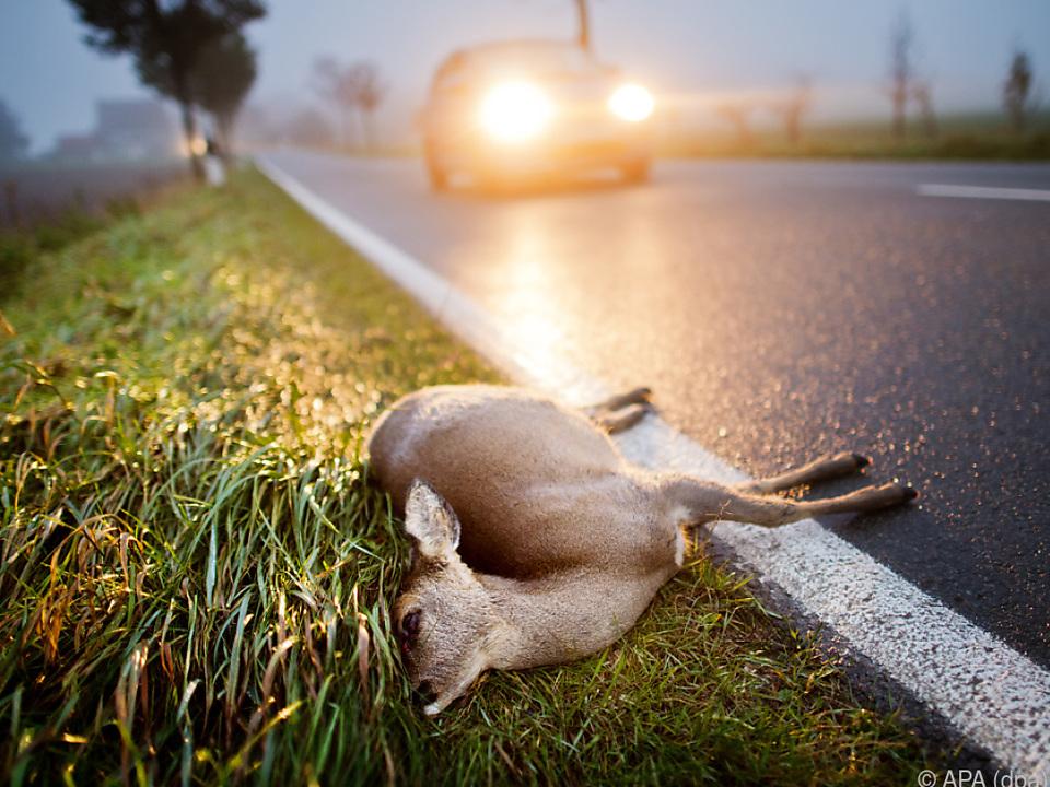 Jährlich mehr als 76.000 Wildunfälle in Österreich