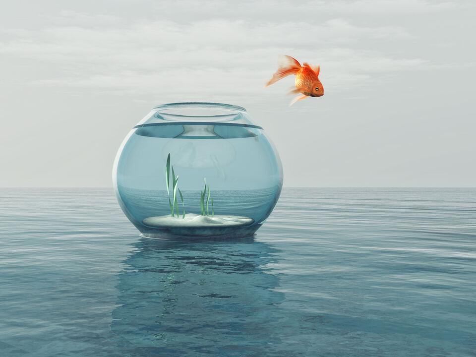 Goldfisch springt aus Glas Abenteuer