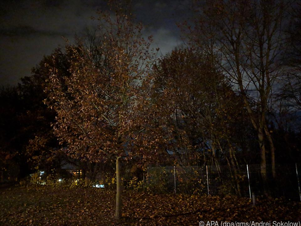 Bäume bei Nacht ohne \