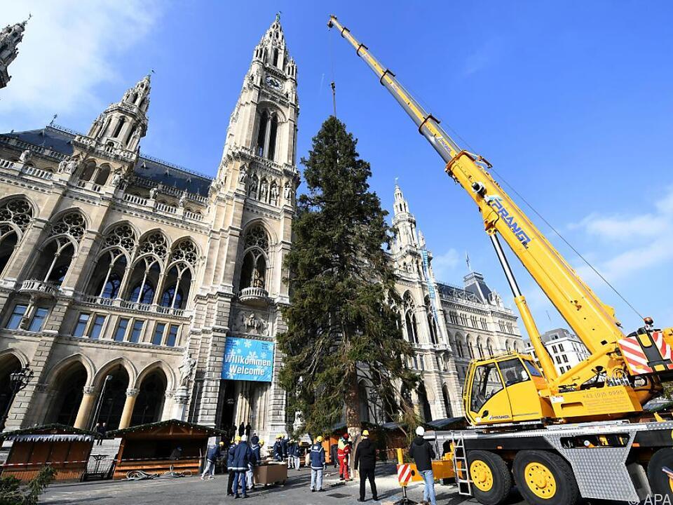 Die 28 Meter hohe Fichte stammt aus dem Bezirk St. Veit an der Glan