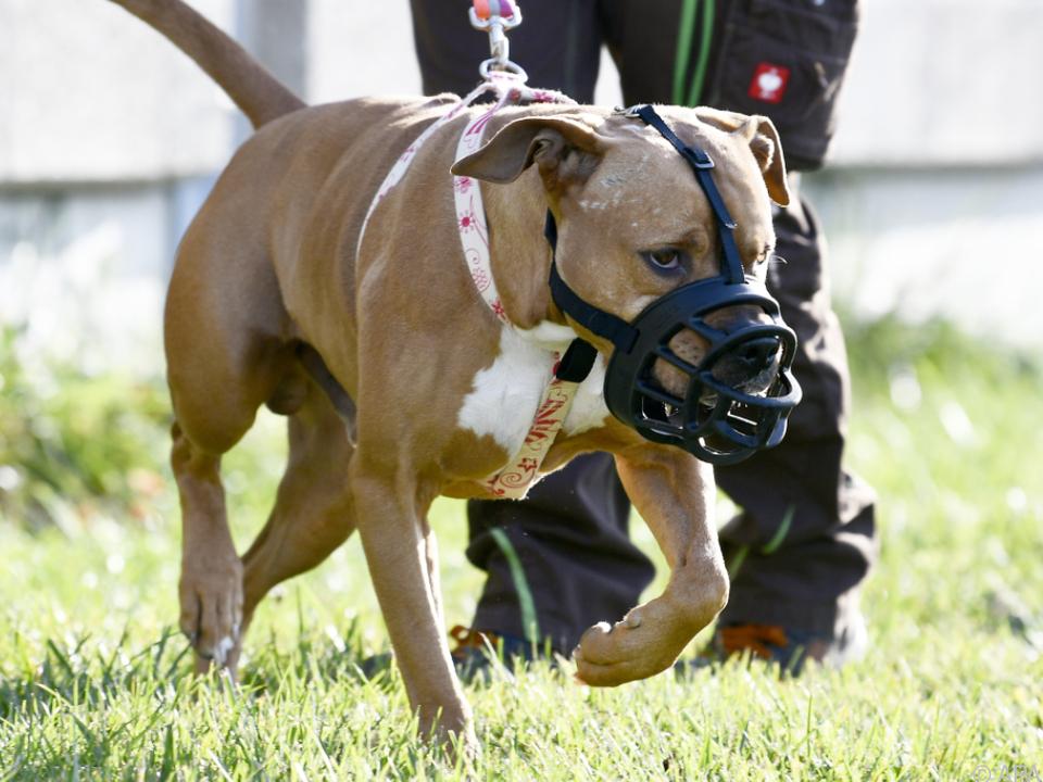Die Leinen-und Beißkorbpflicht soll vereinheitlicht werden hund kampfhund sym