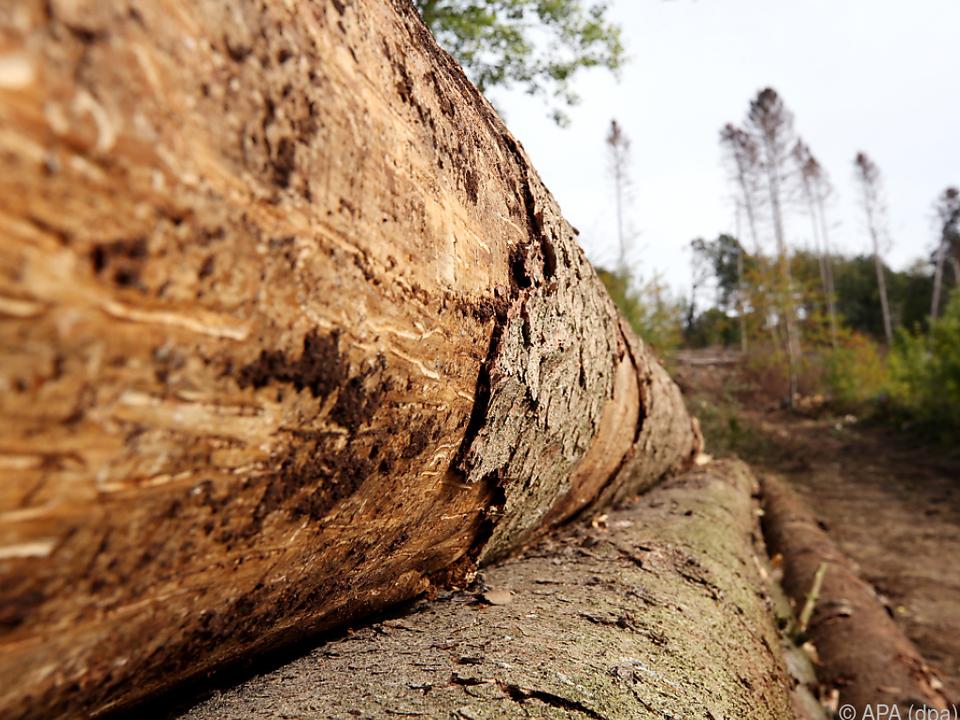 Extreme Wetterphänomene sorgen für Zunahme an Schadholz holz unwetter baum