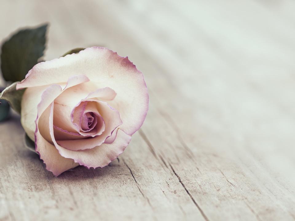 Blume Trauer
