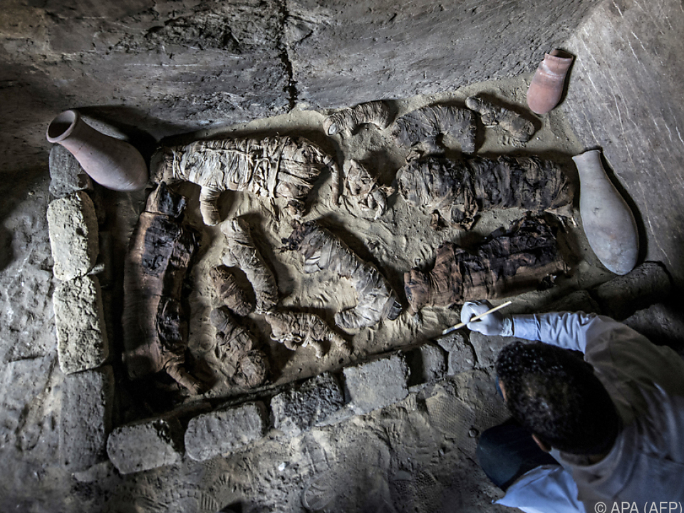 Katzenmumien bei Ausgrabungen in Ägypten entdeckt