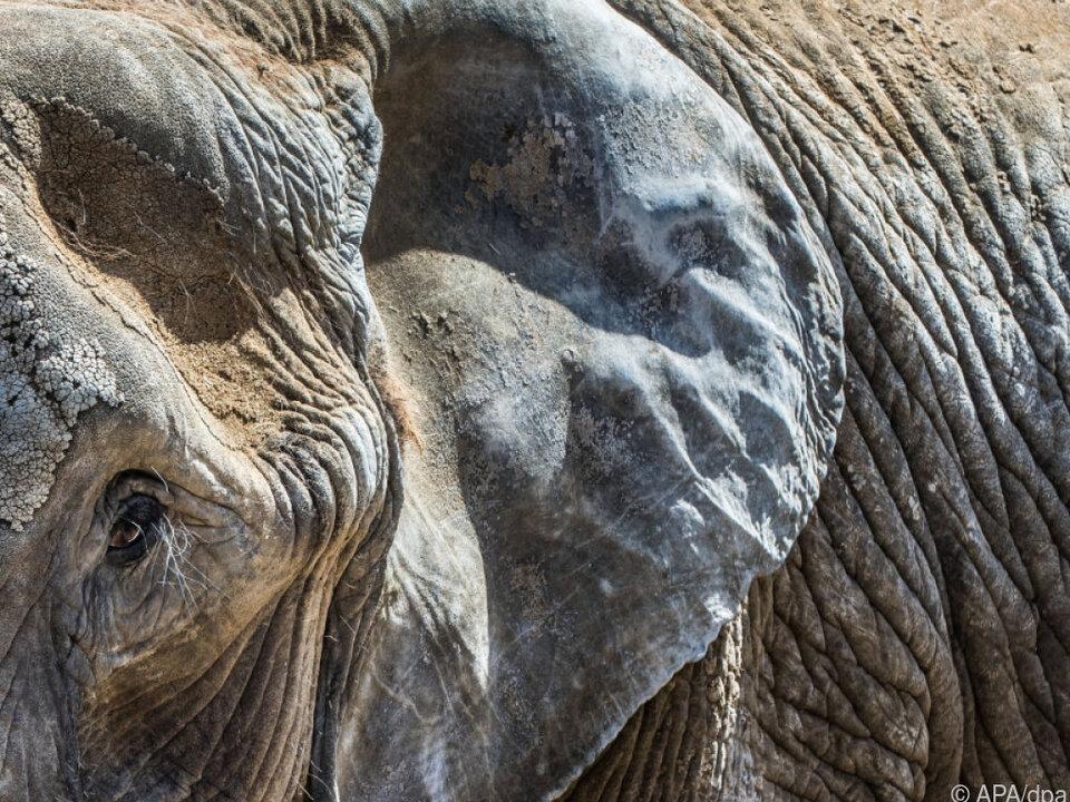 Durch die Abholzung der Wälder verlassen die Tiere ihre Umgebung