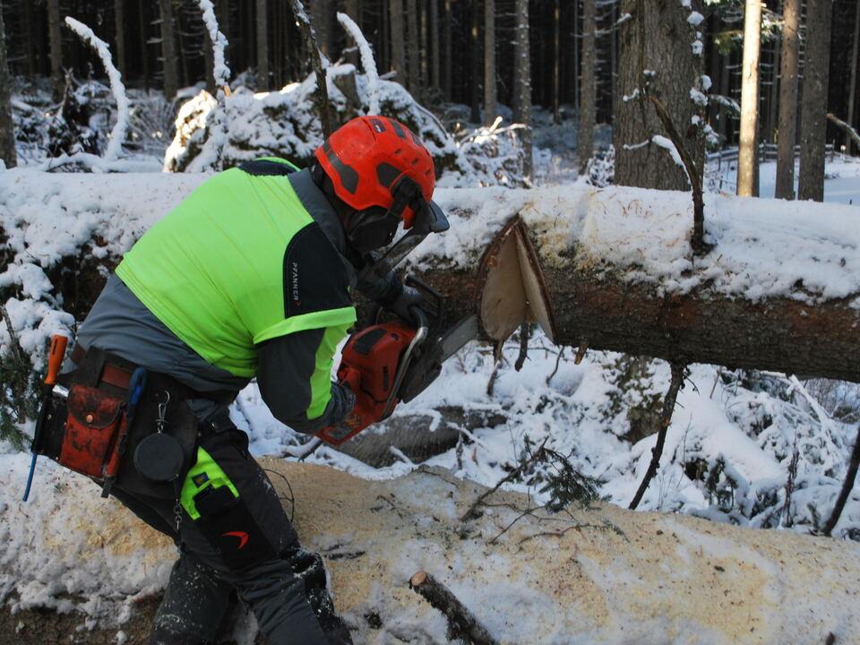 kettensäge motorsäge holz wald sturmholz