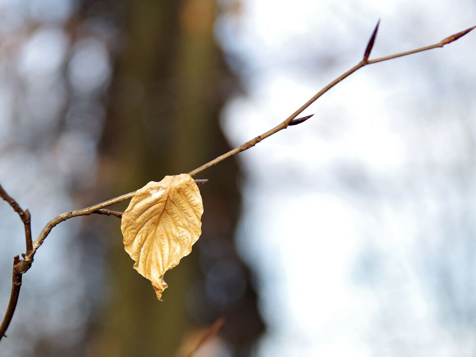 Trauer Herbst Tod