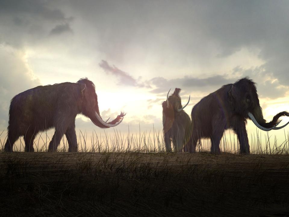 Mammut Wollhaar-Mammut