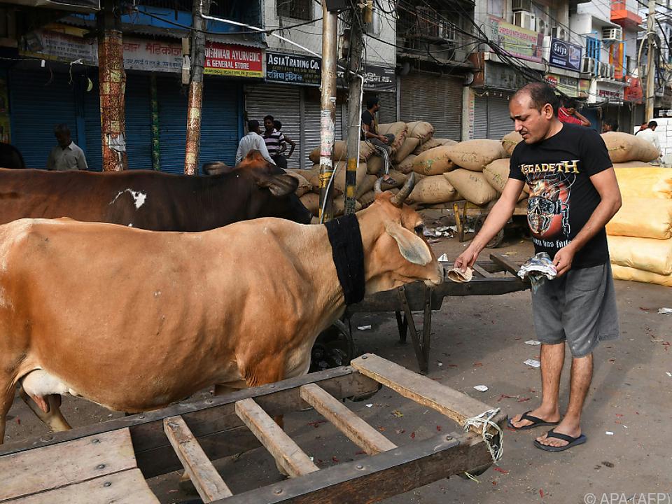 Kühe gelten im Hinduismus als heilig