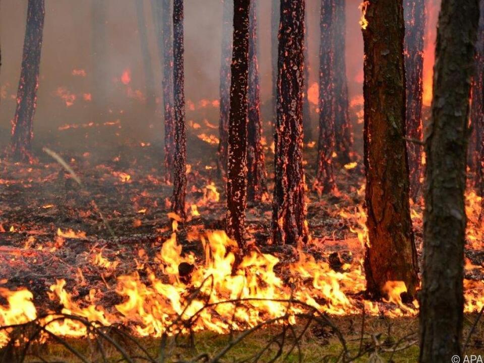 Waldbrände verursachen weltweit immer größere Schäden