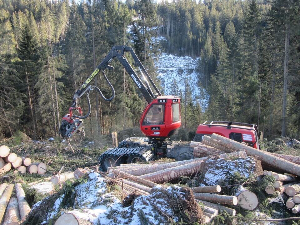 Sturmschäden Schadholz 1023427_Harvester-AmtForstplanung