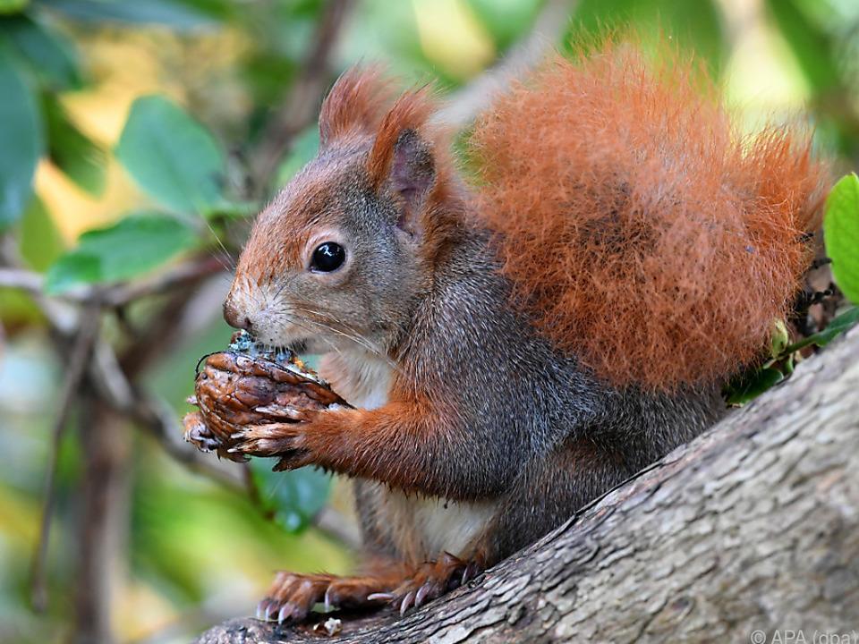 Auch das Eichhörnchen kann es kaum glauben