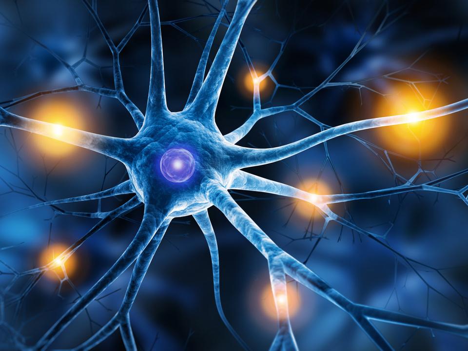 Epilepsie Nervenzellen Gehirn