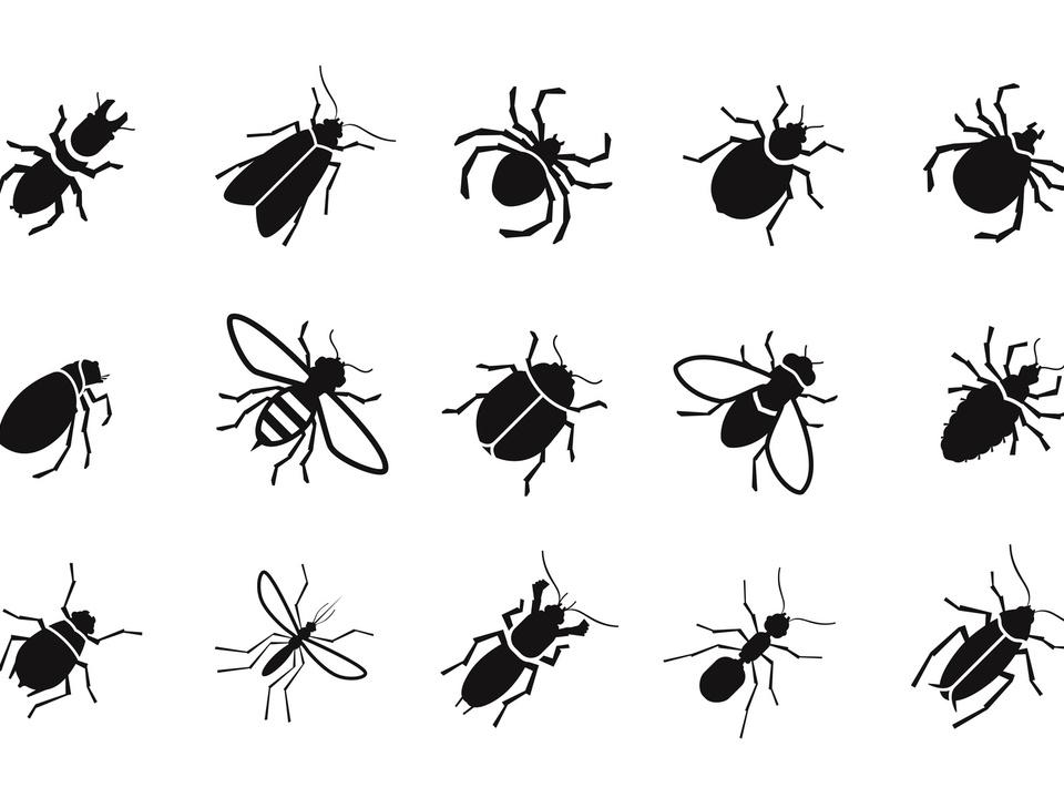 insekten sym