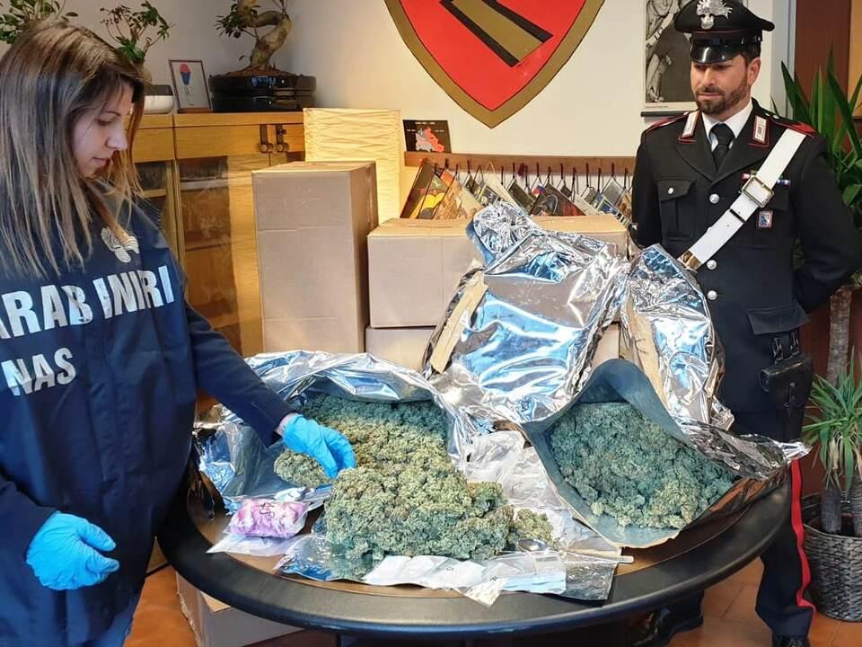 20190330 - 10 kh di marijuana sequestrati a Lana