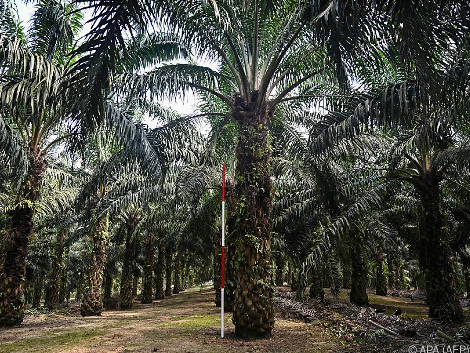 Malaysia droht EU im Palmöl-Streit mit Boykott von Kampfjets