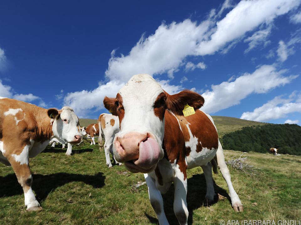 Kühe haben oft Namen wie \