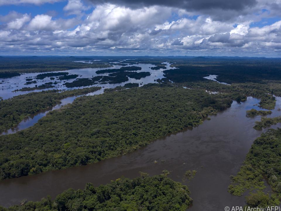 1,35 Mio.Hektar an Regenwald in Brasilien verloren