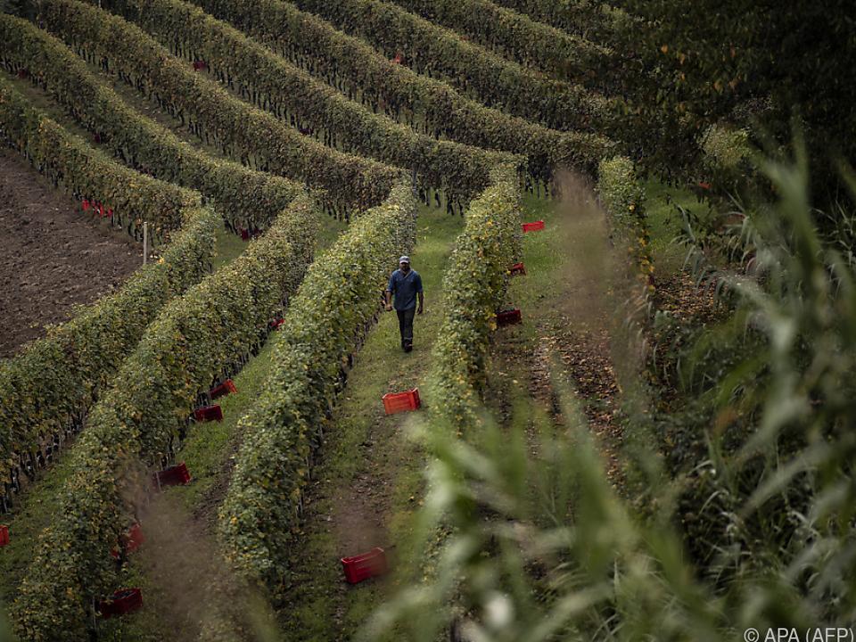 Barolo gilt als Top-Weingegend