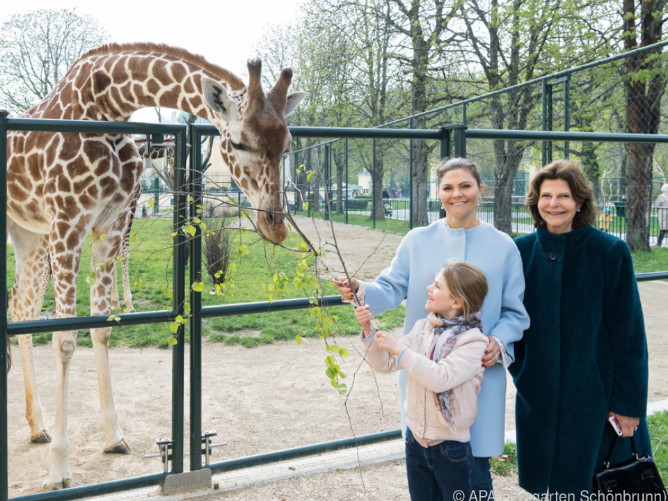 Hohe Tiere: Silvia (r.), Victoria, Estelle und Giraffe in Schönbrunn