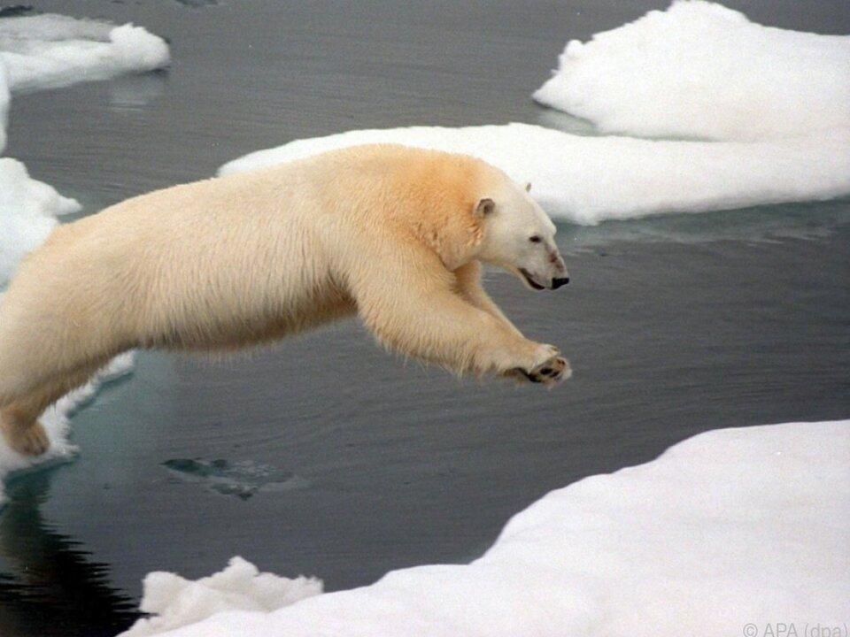 Immer mehr Eis schmilzt schon auf seinem Weg in die zentrale Arktis