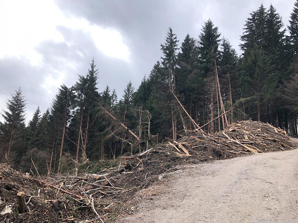Unter anderem dezimieren Stürme und Trockenheit den Wald hierzulande