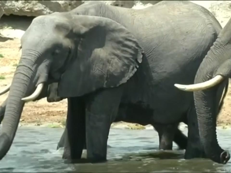 Botswana erlaubt wieder Jagd auf Elefanten