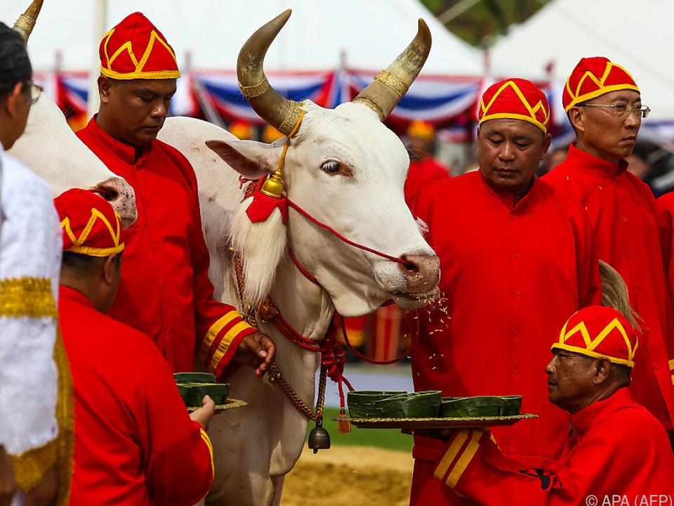 Farbenfrohe Pflüge-Zeremonie unter den Augen des Königs