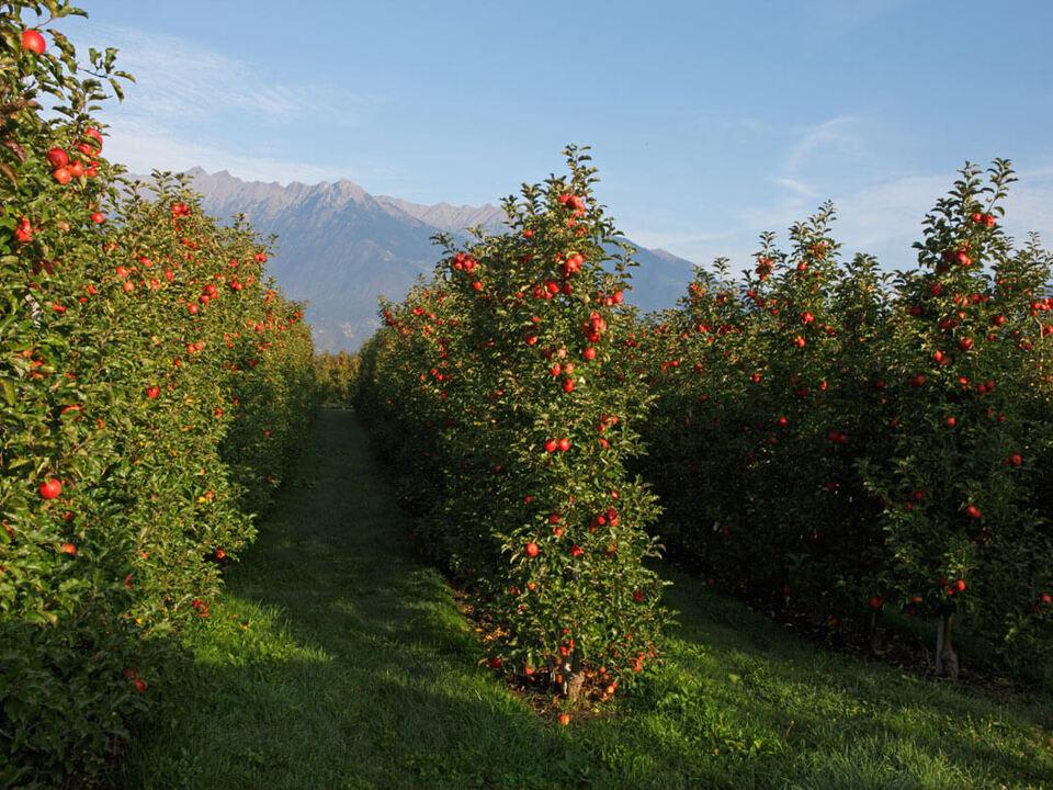 pestizid spritzen apfelbaum sym
