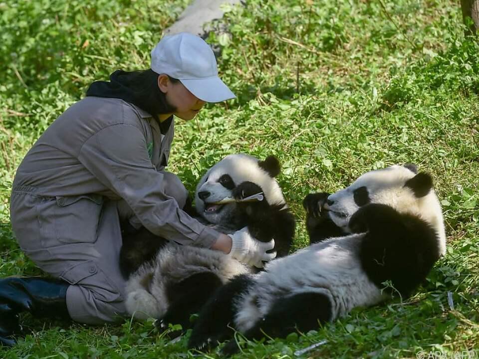 Aufseherin mit den Panda-Zwillingen