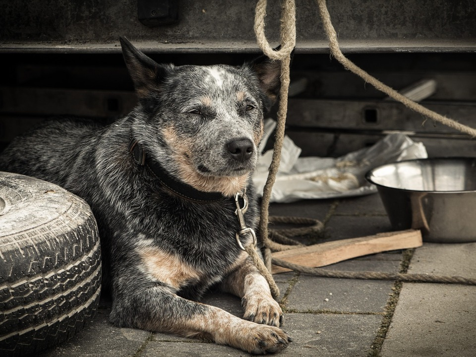 Hund leiden