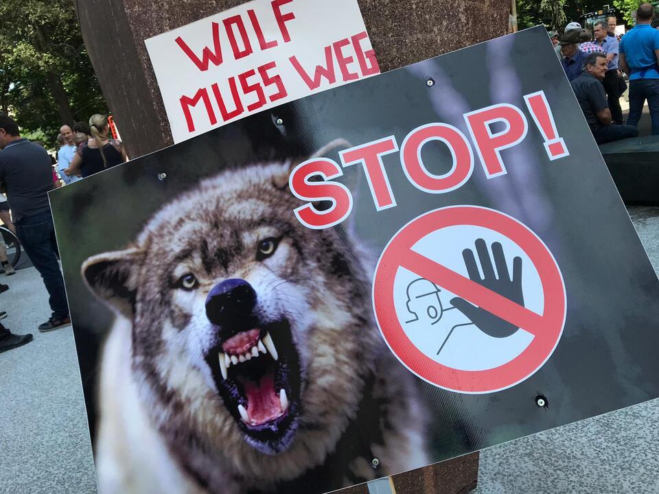 wolf-4915792379000
