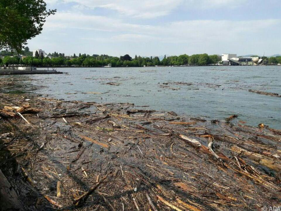 Große Mengen Treibholz wurden angeschwemmt