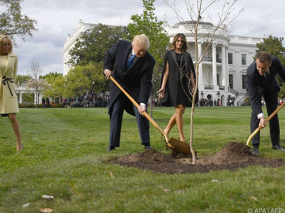 Macron hatte die den Baum im April 2018 als Gastgeschenk mitgebracht