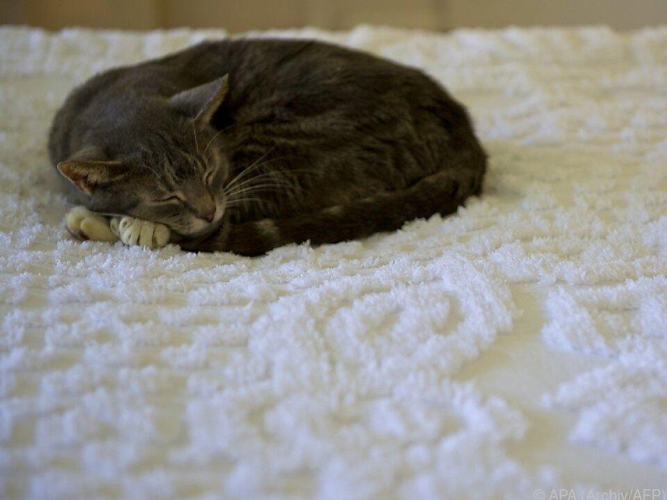 Katzen dürfen oft mit in die Federn