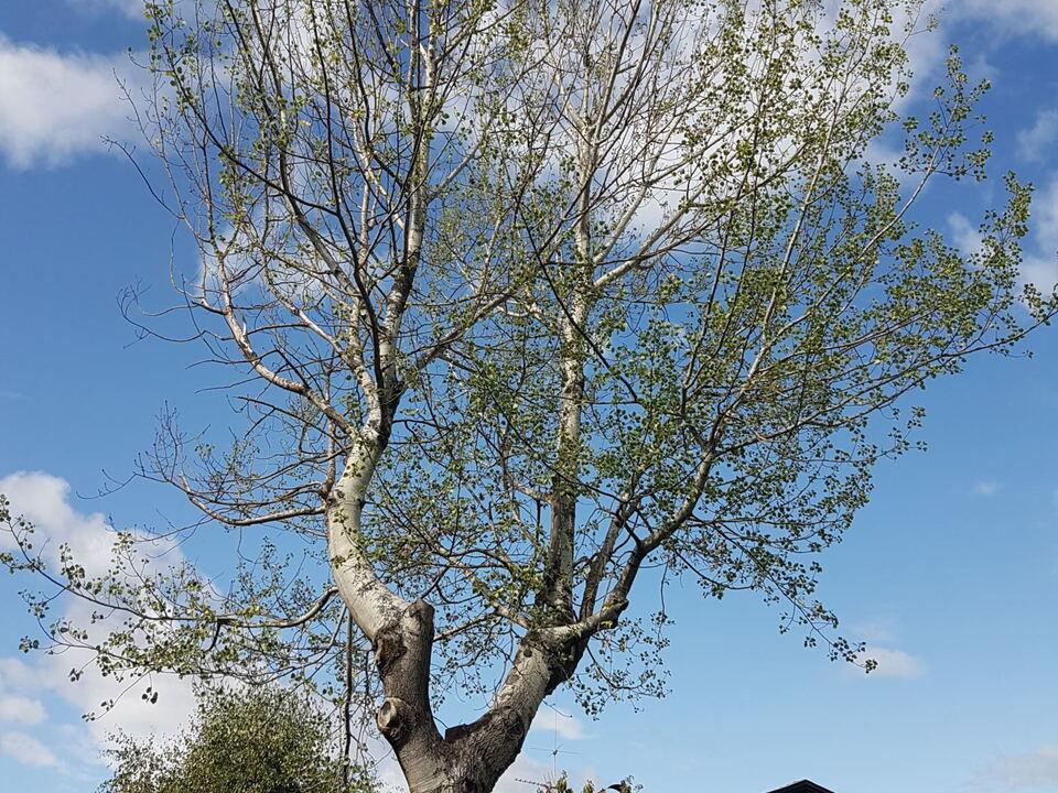 2019-09-09_Presseaussendung abgestorbener Baum