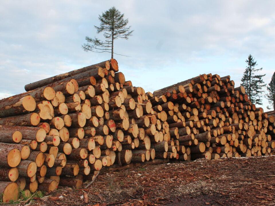 Waldschäden Holz
