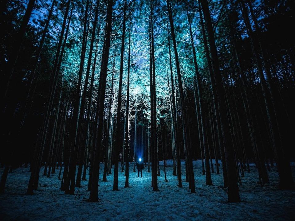 Taschenlampe_Wald