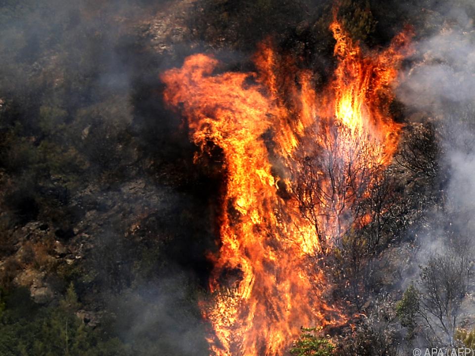 Die Brände waren in Folge einer Hitzewelle ausgebrochen
