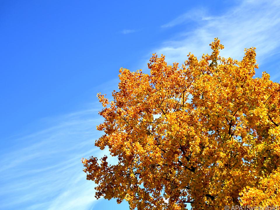 Temperaturen in der Steiermark teilweise über 27 Grad herbst baum wetter sonne goldener herbst