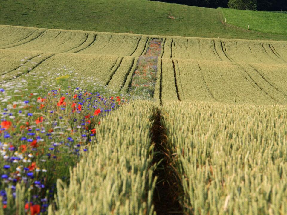 Feld Blumen Artenvielfalt Biodiversität