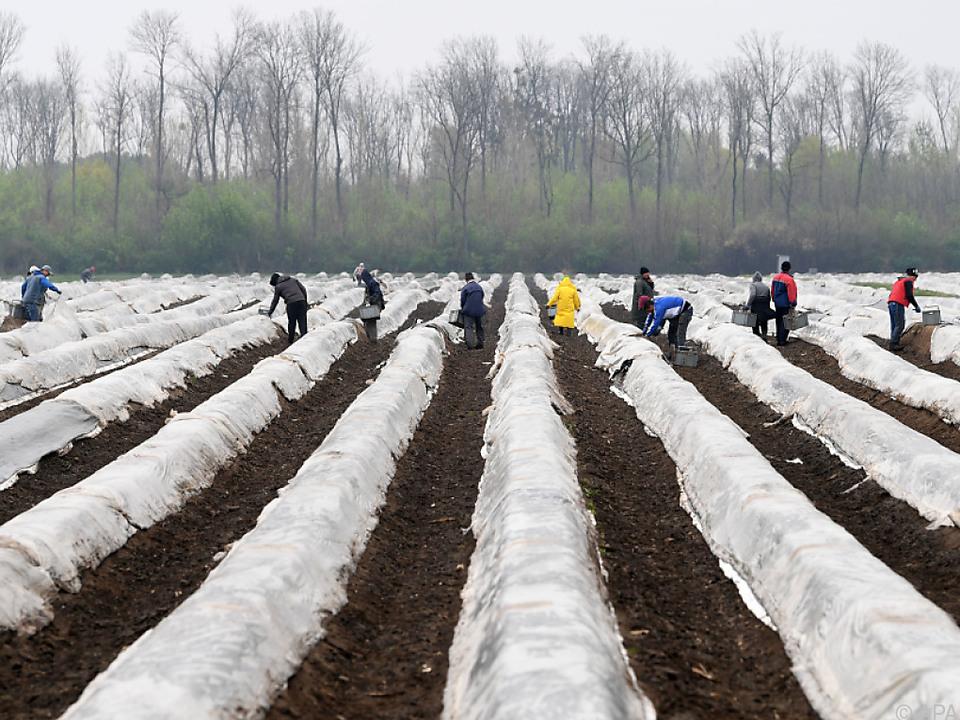 Die Landwirtschaft braucht günstige Arbeitskräfte