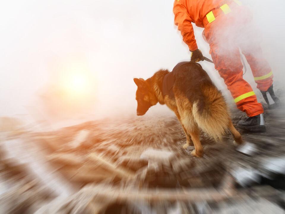 Suchaktion suchhund vermisst rettung hund weißes kreuz spürnase hund sym