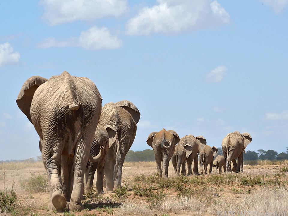 Tödlicher Zusammenstoß mit einem Elefanten