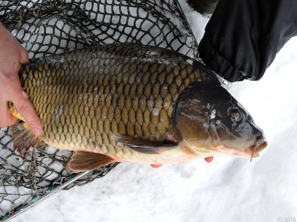 Fisch ist vor allem im Osten des Landes beliebt