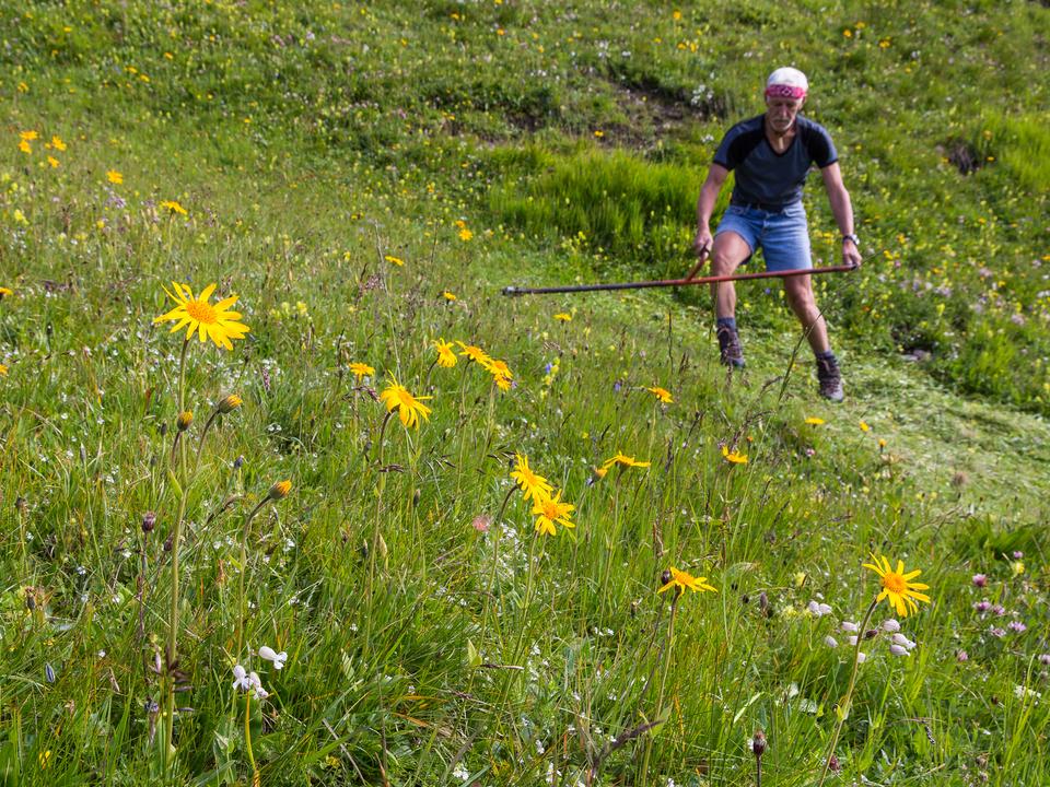 landwirtschaft landwirt wiese blumenwiese bauer arbeit sym Für das Management von Natura 2000 sind in den kommenden sieben Jahren insgesamt 66,5 Millionen Euro nötig. 1054337_Natura_2000_Heumahd_Josef_Hackhofer