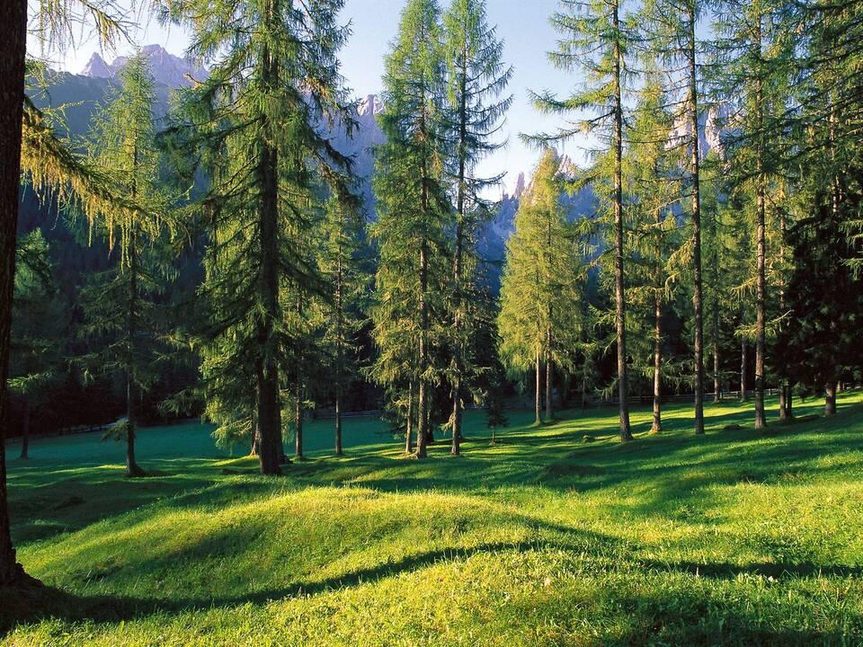 wald wiese natur sym landwirtschaft1054395_Natura_2000_L#65533rchenwiesen_Innerfeldtal_Sexten
