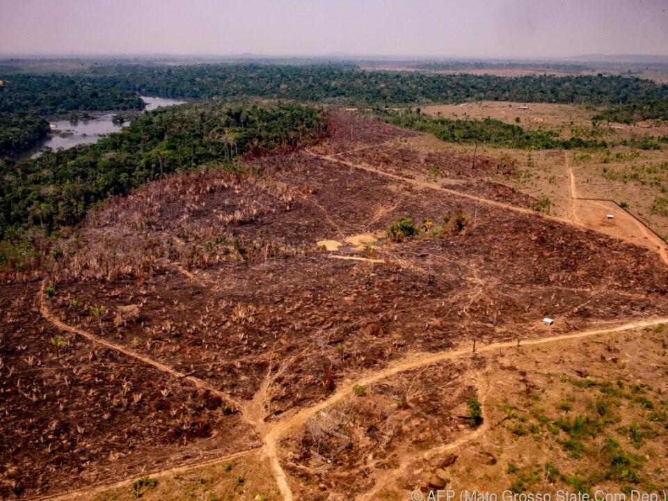 9.166 Quadratkilometer Amazonaswald wurden im Vorjahr vernichtet