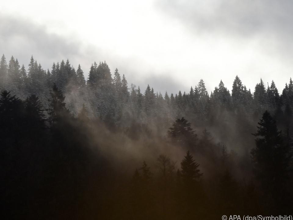 Ein Wald bedeutet für die Besitzer oft viel Arbeit